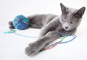 venta-gatos-azul-ruso